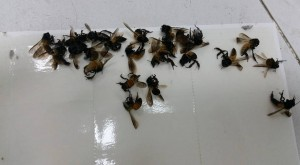bee control singapore services